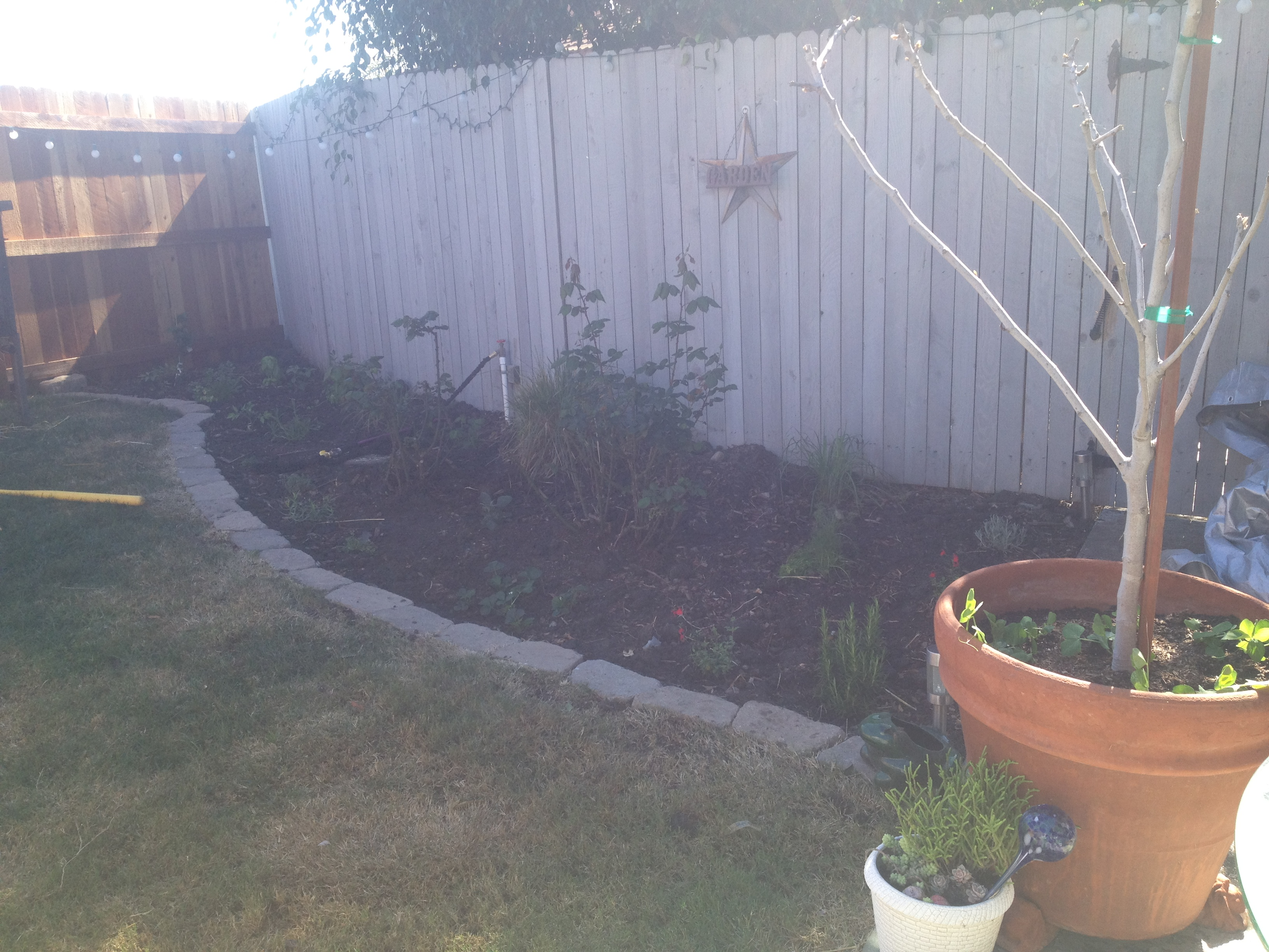 Urban Homesteading: Working With Dead Soil and Getting Started With Rabbits